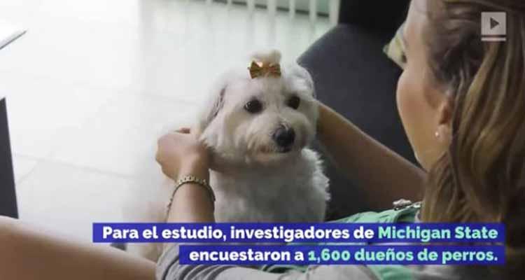 Estudio dice que los dueños moldean las personalidades de sus perros