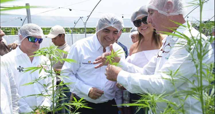 Planta de producción de marihuana medicinal se abrirá en Córdoba, Quindío