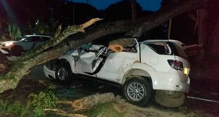 árbol cayó carro vía Tebaida - Armenia