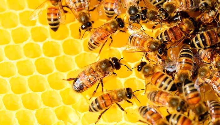 protección abejas