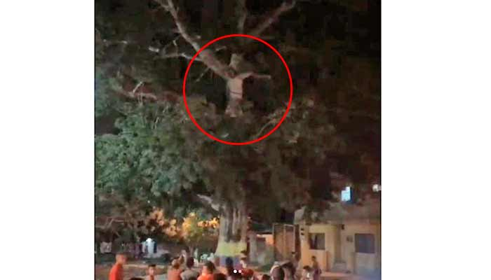 amontonaron cuarentena creyeron ver Cristo en árbol