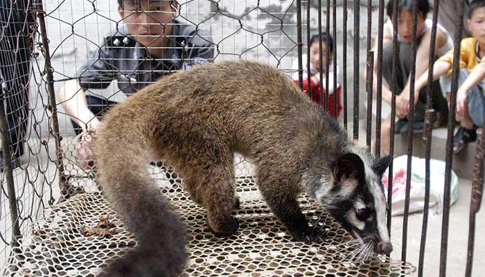 Gobierno chino publicó lista de animales comestibles y prohibidos