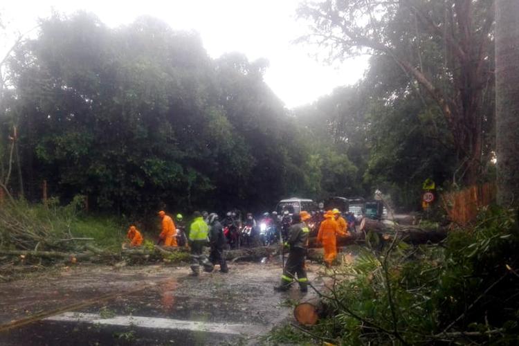 Aguacero provocó caída de árboles y trancones en vía Montenegro – Armenia