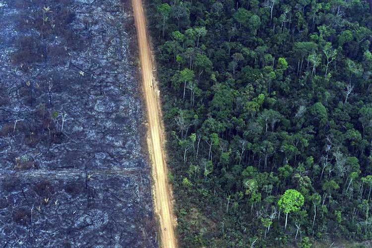 Amazonia-en-riesgo