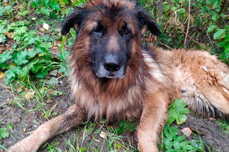 Perro sobrevivió a ser sacrificado, escapó de su tumba y fue a buscar a sus dueños