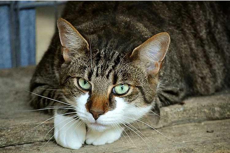 Así debe alimentar a su gato según expertos
