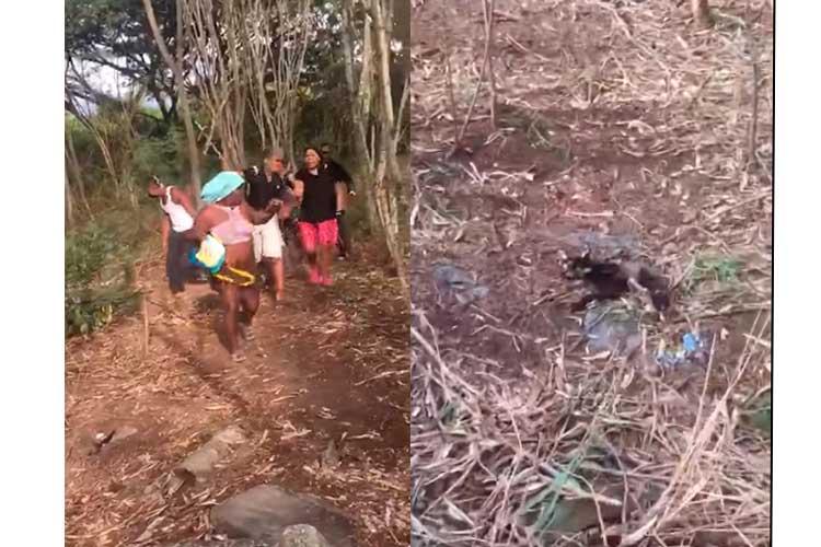 Video: Golpean supuestas brujas que hacían ritual con gatos muertos en Cali