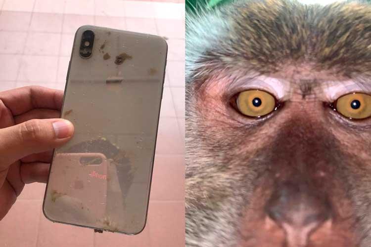 En video: mono se robó celular y se tomó un vídeoselfie